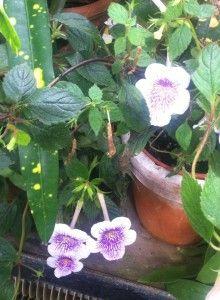 #botanicgarden in #oxford. #plants #botany #travel