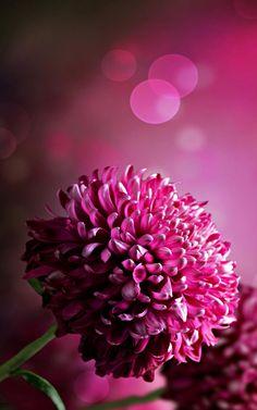 Flower Wallpapers Pink High Quality Resolution Phone Desktop