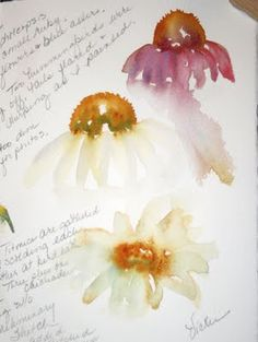 Sketching in Nature: Coneflowers--Vickie Henderson