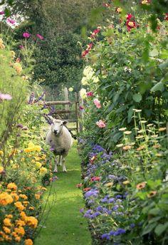 A Whitewashed House — nordicsublime:  Sheep garden