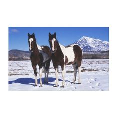 Paint Horses Standing in the Snow Canvas Print