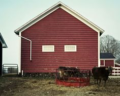 2 cows and barn, Pine Plains, 2014