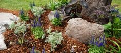 A Rock Garden Is Easy to Build. A rock garden is frequently built in garden areas specifically chosen for the purpose, it can also be constructed on any area of ground you have no other use for. The only requirement is good drainage since rock and mountain-growing plants do not grow well in water-bound soil. Read more...