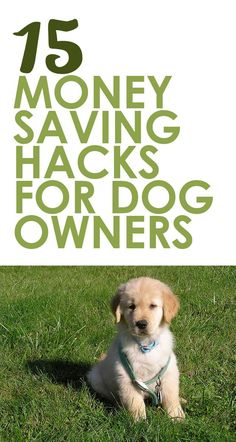 - Dogs - 13 Easy Money-Saving Hacks For Dog Owners dog care diy tips Game Mode, Puppies Tips, Dog Care Tips, Pet Tips, Pet Care, Dog Hacks, Dog Training Tips, Training Courses, Training Online
