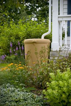 Rain barrels or cisterns are convenient systems of rainwater collection that store runoff from your rooftop and can be used for a variety of activities. Residen…