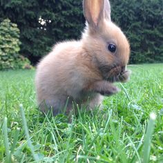 Cute animals🐰