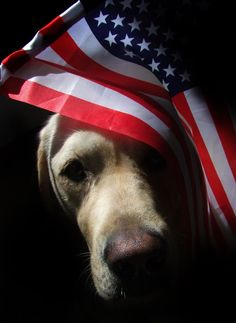 Let Freedom Ring Photo by Erin Wheatley -- National Geographic Your Shot