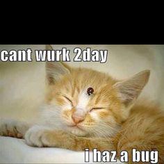 Awww. =^..^= http://www.kittyprettygifts.com #cats #lolcats #cute #memes