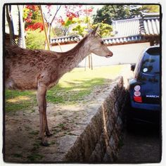 Nara. Japan, 2 years ago. - @simfonia- #webstagram