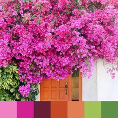We have a major color rush on this bougainvillea beauty!  by @marycostaphoto | #foundpalettes
