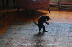 Thurston Easterbrook does his very best Michael Jackson impersonation. by *lalalaurie, via Flickr