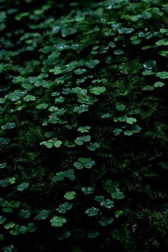 green*reblooming
