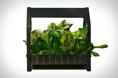 Hydroponics IKEA launches indoor garden that can grow food all year-round - The furniture retailer has just unveiled its new KRYDDA/VÄXER series, a hydroponic growing system that will allow anyone to easily grow fresh produce at home. Indoor Hydroponic Gardening, Hydroponic Farming, Indoor Vegetable Gardening, Hydroponic Growing, Hydroponics System, Aquaponics Diy, Container Gardening, Permaculture, Apartment Gardening