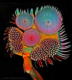 The colorful images highlight the beautiful complexity of nature.