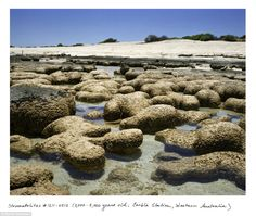 The oldest living things in the world.  Stromatolites, which are the oldest living organisms on the planet, and some scientists believe were the first living things on Earth. These examples are 2-3,000 years old, and are in Western Australia
