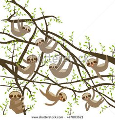 card banner template with funny and cute smiling Three-toed sloth set on green branch tree creeper, copy space isolated white background. Vector