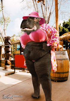 Chop A Hippo 4 - Worth1000 Contests