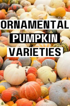 What is fall without ornamental pumpkins!? A gorgeous autumn display of pretty pumpkins goes a long way towards creating that cozy fall feeling. While there are endless different types of pumpkins, a few varieties stand out as stunning ornamental pumpkins to add to your seasonal display this fall. Here are 7 of the top varieties to look for this year.