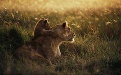25 Adorable Animal Family Photos - BlazePress