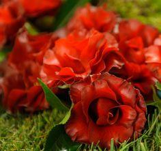 Feira Internacional das Camélias Rose, Flowers, Plants, Fair Grounds, Journals, Floral, Roses, Plant, Royal Icing Flowers