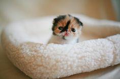 Tiny kitten. Big head.