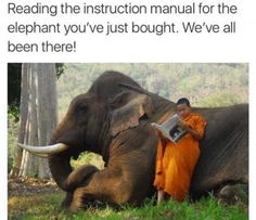 Best Ever Funniest Wildlife Photo Memes of 2016 | Quotations and Quotes