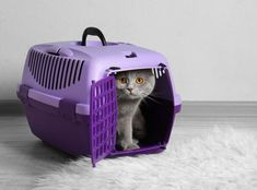 How To Introduce A Kitten To An Older Cat Crazy Cat Lady, Crazy Cats, Introducing A New Cat, Munchkin Cat Scottish Fold, Cat Apartment, Cat Enclosure, Reptile Enclosure, Cat Nutrition, Cat Carrier
