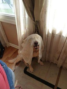 If I can't see you, you can't see me...  38 Dogs Who Suck At Hide-And-Seek