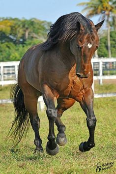 Bay Horse. Wow, this horse is gorgeous!
