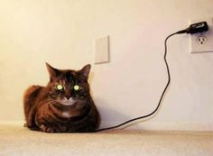 I think its fully charged #cute #charged #entertainment #interesting