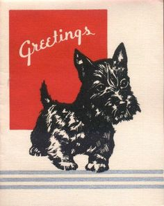Vintage Scottie Card #yuki #yukituristainsolita #dog #scottishterrier #wheatscottie #cachorro  #cachorroetudodebom #pet #pets #petsofinstagram #petsgram #instapuppy #cute #instacute #instapet #puppylove #puppygram #scotties #terrier #scottishterriersofinstagram #puppiesofinstagram #scottielove #scottielove #scottish_terrier #scottielovers #scottieobsessed #scottiegram #scottishterribles #themostbeautifuldogintheworld