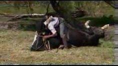 The Horse Whisperer gauho - YouTube