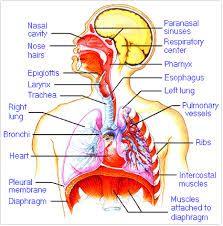 plaquette sanguine basse síntomas de diabetes