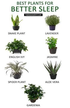 10 Infographics That Will Help You Sleep Better Effortlessly is part of Bedroom plants - Don't miss out the practical guide to better sleep! The 10 infographics will solve your sleep problems in an unexpected way Inside Plants, Cool Plants, Plants That Repel Bugs, Container Gardening, Gardening Tips, Organic Gardening, Indoor Gardening, Gardening Services, Gardening Gloves
