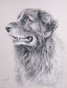 Custom pet portraits, custom dog portrait - carbon pencil on Ingres paper, from your photographs.