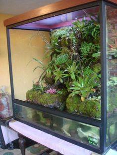 acua terrarios Gecko Terrarium, Cichlids, Aquascaping, Plantar, Aquaponics, Fish Tank, Horticulture, Reptiles, Badass