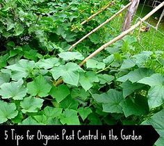 5 Tips for Organic Pest Control in the Garden