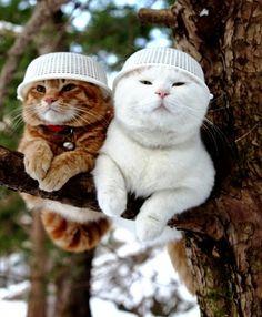 5 Cutest Kittens You will Ever See estos gatos están graciosos_$