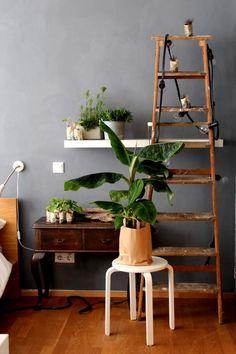 green plant gang - Zimmerpflanzen Sammlung // von knobz #urbanjunglebloggers