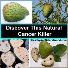 Discover This Natural Cancer Killer: Do you love tropical fruits? Have you heard about graviola? This delicious tropical fruit is common in areas such as Mexico, South America and Cuba. It has several other names depending on the region, including soursop, Brazilian paw paw and anonna muricata.