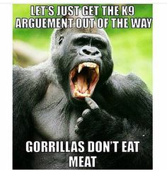 let's just get the canine argument out of the way, gorillas don't eat meat #vegan power