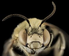 To bee or not to bee: Are insects conscious? Jo