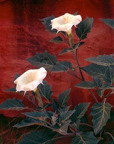 joseph holmes paintings ile ilgili görsel sonucu