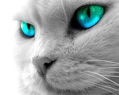 Resultado de imagen para gatos
