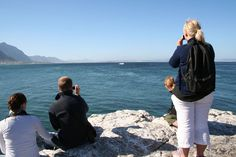 Hermanus Photo Gallery Holiday Resort, Whale Watching, All Modern, Travel Guide, Cape, Photo Galleries, Couple Photos, Gallery, World