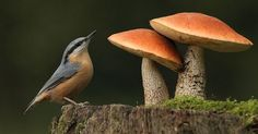 bird and two mushrooms