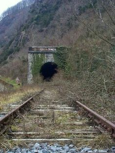 Things Living Things may refer to: Abandoned Train, Abandoned Buildings, Abandoned Places, Train Pictures, Cool Pictures, Train Tunnel, Railroad Photography, Old Trains, Train Tracks