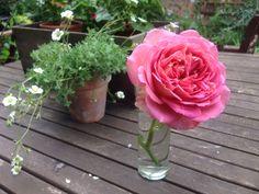 Rosa Jubilee Celebration, 19th June