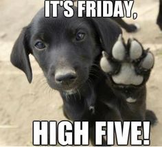 Its Friday, High Five friday happy friday tgif friday quotes its friday friday quote funny friday quotes quotes about friday Good Morning Friday, Feel Good Friday, Good Morning Quotes, Funny Morning, Friday Feeling, Morning Sayings, Morning Morning, Morning Humor, Morning Images