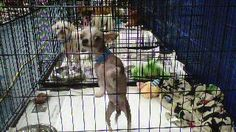 Dogs Rescued From Puppy Mill In Mississippi